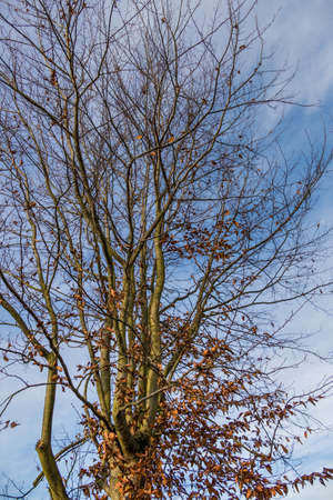 transient: deciduous tree in autumn, symbolizing seasons, change, changes, new and old