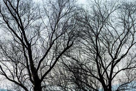 economic botany: trees in autumn, symbolizing growth, nature, network, climate Stock Photo