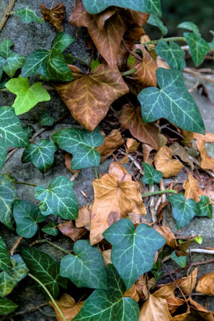 generation gap: young and old ivy symbol for generations, generation gap, age structure,