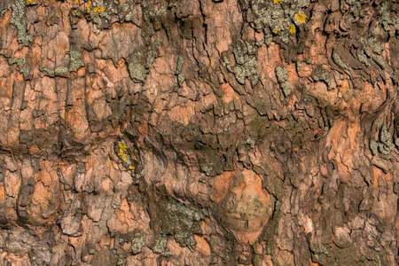 economic botany: bark of an old tree, symbol of background, strength, network Stock Photo