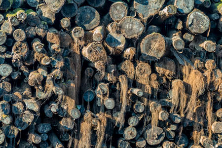 transience: age stack with moss and firewood, symbol of building materials, fuel, transience, death Stock Photo