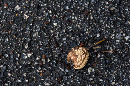rotting: rotting fruit on stone, symbol of impermanence and death