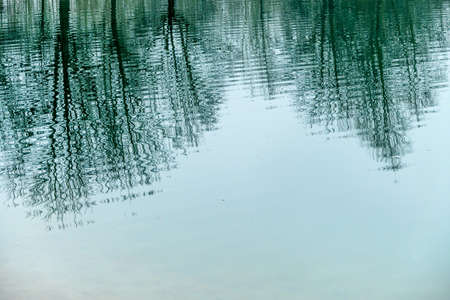 meditative: trees reflecting in the water, symbol of nature, meditation, reflection
