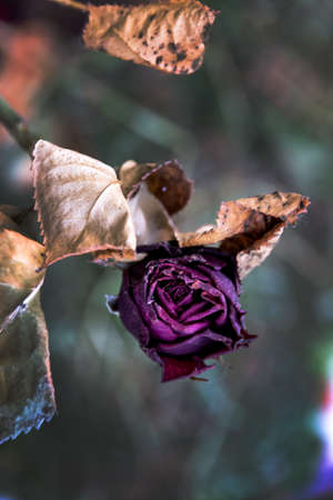 desolation: withered flowers. death, end of life, death, forgetting and remembering