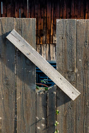 new beginnings: shoot and old wooden fence, symbolizing life, growth, new beginnings, strength, hope Stock Photo