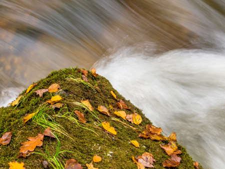fluent: a rock with autumn leaves in a stream Stock Photo