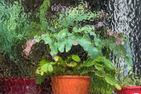 bourgeois: Potted plants in the greenhouse, symbol of protection, growth, maintenance Stock Photo