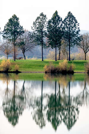 trees reflecting in the lake, symbol of nature, idyllic, contemplation Stock Photo