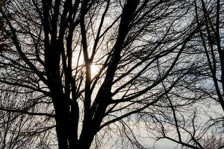 wistfulness: tree in the evening sun, season, change, melancholy,