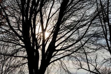 wistfulness: tree in the evening sun, season, change, melancholy,