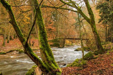 fluent: torrential brook in autumn forest, symbol of autumn, water, nature,