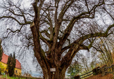 wistfulness: old tree with many branches, symbolizing growth, experience, networking,