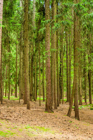 economic botany: many trees in a forest with fresh green