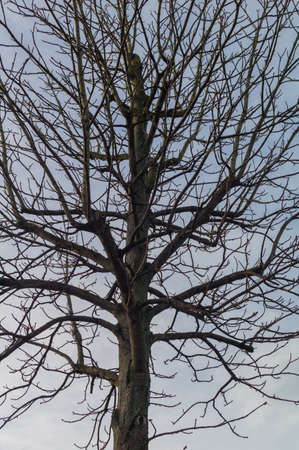 strains: a tree without leaves in winter. symbolic photo for networks