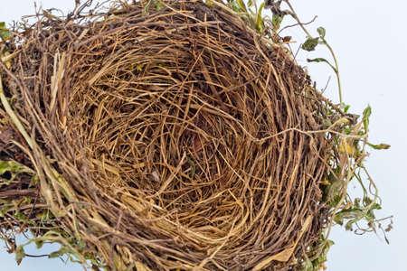 nido de pajaros: el nido vac�o de un ave. vac�o aves anidan. imagen S�mbolo para el ahorro de construcci�n y construcci�n
