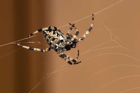 paciencia: ara�a construye una red, s�mbolo de fotos para el comportamiento de la caza, la precisi�n y la paciencia
