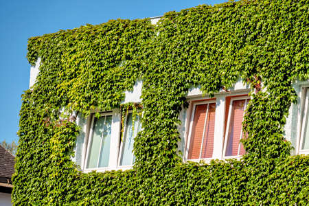 isolation: leafy house facade, symbol of insulation, isolation, growth