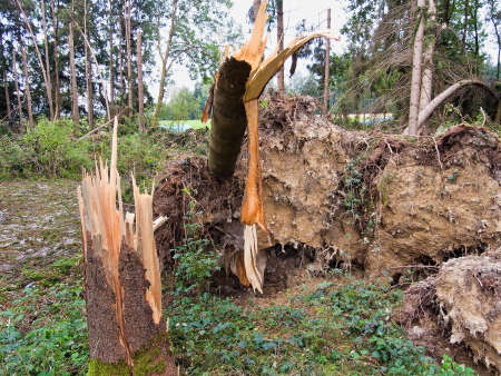 overthrown: storm damage. fallen trees in the forest after a storm. Stock Photo