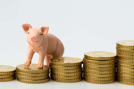 feed: a pig stands on a stack of coins. rising feed costs in agriculture. falling yields in pork