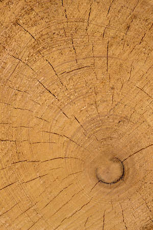tree disc: trees in a forest have been recut at woodwork. natural, energy-efficient and sustainable heating.