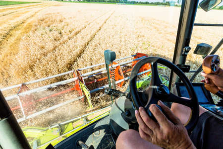 peasantry: a cornfield with wheat at harvest time. a combine harvester at work. Stock Photo