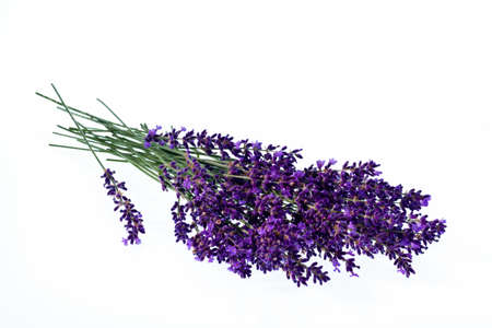 therapie: lavender flowers isolated against a white background. purple summer flowers.