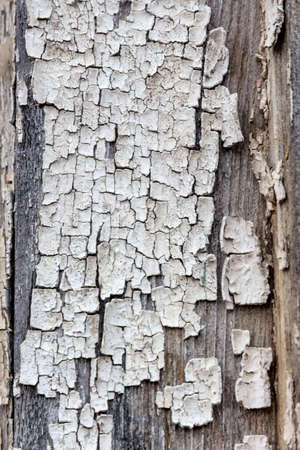 immobilien: old, exfoliated color in a wooden box. weather Stock Photo