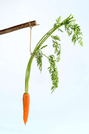 lie forward: carrot on a stick. fresh fruits and vegetables is always healthy. symbolic photo for motivation. Stock Photo