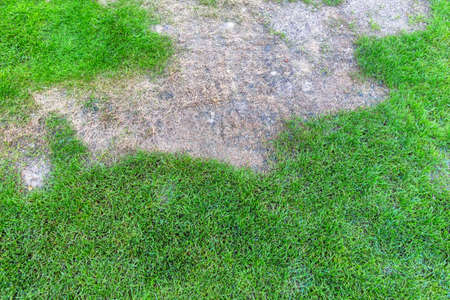 lawns: wiese was sprayed with a herbicide. lawn renewal