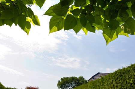 photosynthesis: foliage of a tree and blue sky, symbol photo for growth, spring, photosynthesis
