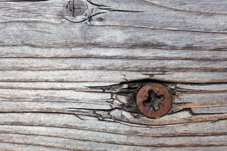 screw: rusted screw in wood