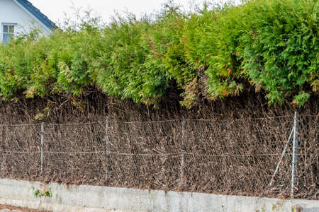 generational: fence and green hedge, a symbol of growth, privacy, generational change Stock Photo
