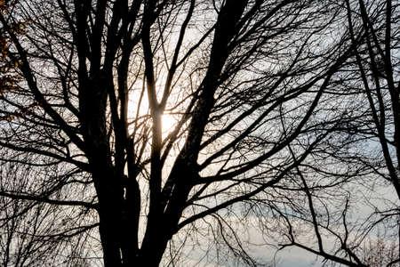 melancholy: tree in the evening sun, season, change, melancholy,