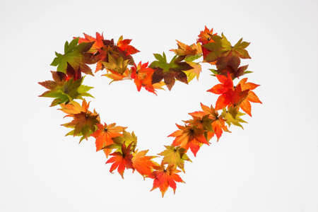 dissimilarity: the colorful messengers of autumn. leaves on a white background in heart shape. symbol of love photo