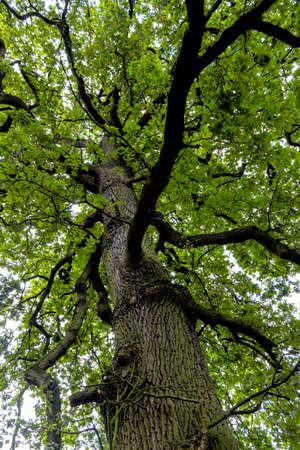 economic botany: deciduous and treetop, symbolizing growth, life, nature, network Stock Photo