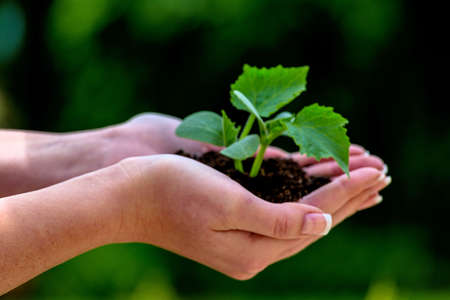 plant hand: a woman holding a small plant in hand. symbolfotoo for nature and growth Stock Photo