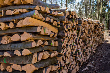 natural energy: trees in a forest have been recut at woodwork. natural, energy friendly and sustainable heat. Stock Photo