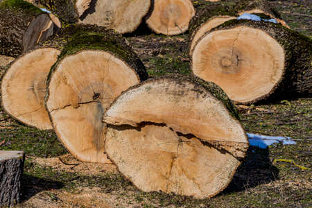 obtain: trees were cut to firewood for heating to obtain for the winter.