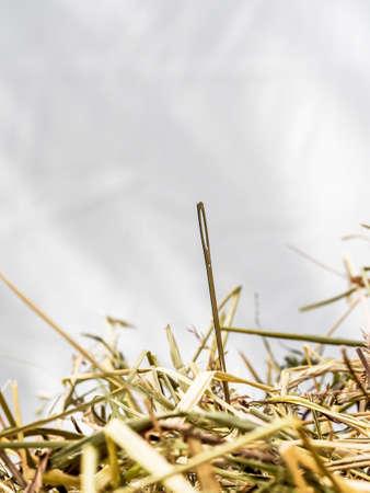 unacceptable: find symbolfoto proverbial needle in a haystack