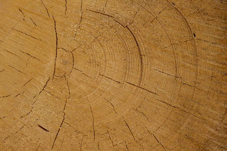 tree disc: trees in a forest have been recut at woodwork. natural, energy friendly and sustainable heat. Stock Photo