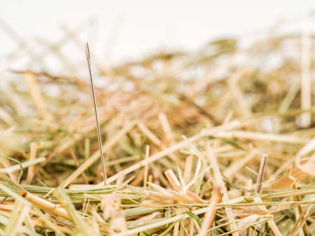 problemsolving: a needle is in the haystack. icon photo of a proverb for challenge, search and locate.