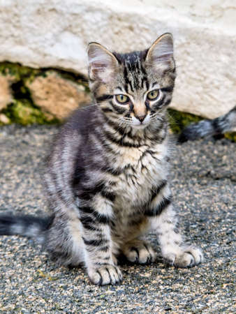 cute kittens: a small cat sits and waits for their food