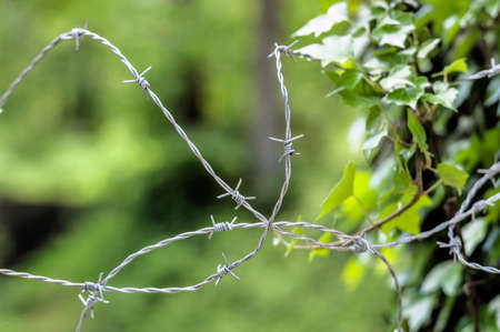remand: a barbed wire for leaves of a bush. dealing with nature.