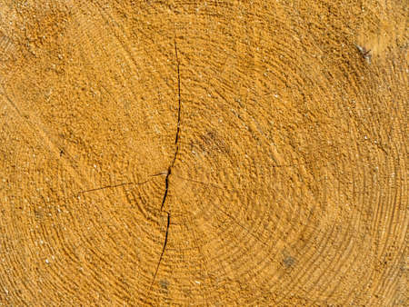 tree disc: the annual rings of a felled tree.