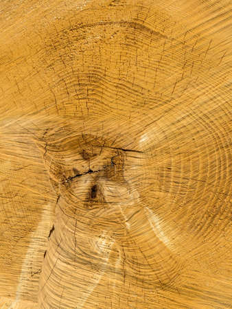 economic botany: the annual rings of a felled tree.