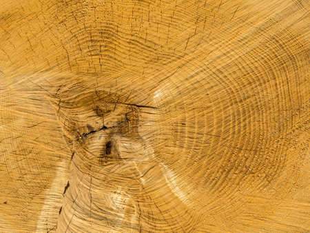 the annual rings of a felled tree.