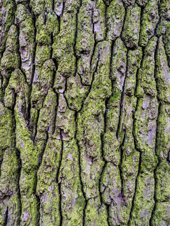 strains: bark on a tree as a background