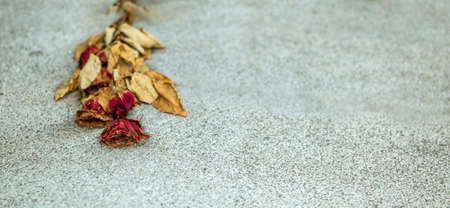 transient: on a stone slab is a faded rose. symbol photo for solitude and oblivion. Stock Photo