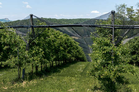 severe weather: about plantations of fruit nets was hung against storms and hail. protect fruit and plants from severe weather.
