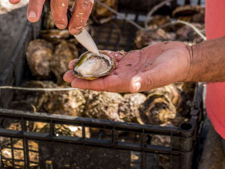 saltwater pearl: oyster farming in europe Stock Photo